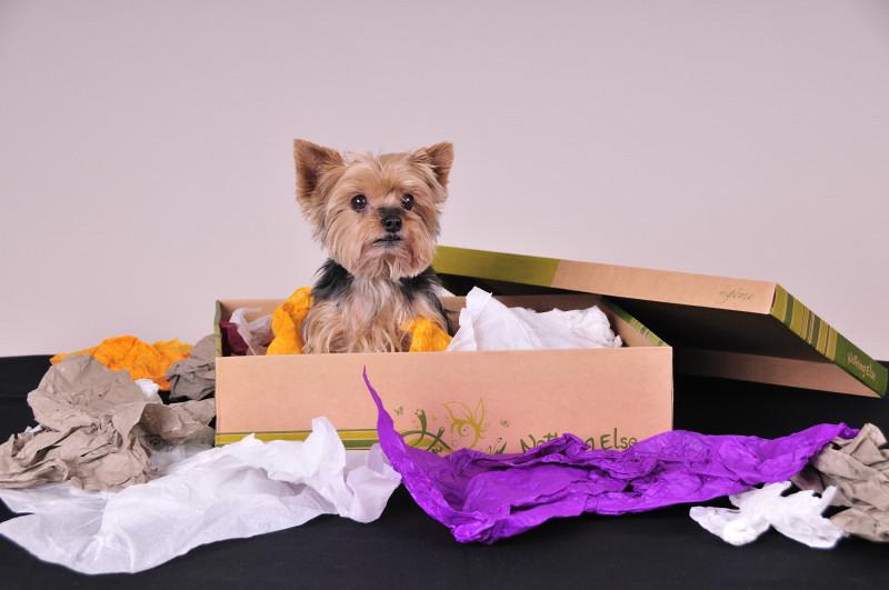 animaux de compagnie sylvain photographe limoges. Black Bedroom Furniture Sets. Home Design Ideas